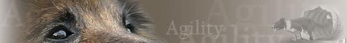 http://www.agility-ch.ch/